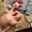Продам гусей тушками - Изображение #4, Объявление #1696862