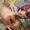 Продам гусей тушками - Изображение #3, Объявление #1696862