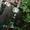 """ПРОДАЮ ДАЧУ В  """"ЭНЕРГЕТИК 2"""" Р-Н НОВОПАВЛОВКИ - Изображение #5, Объявление #1701282"""