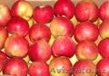 Отличные польские яблоки оптом в Петропавловске