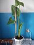 комнатные растения недорого!