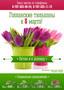 Голландские тюльпаны к 8 марта!