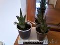 Продам комнатные растения в ассортименте